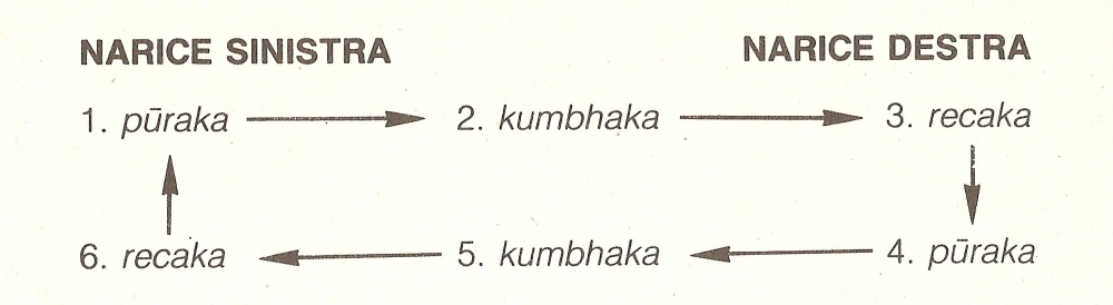 schema respiratorio per anuloma-viloma