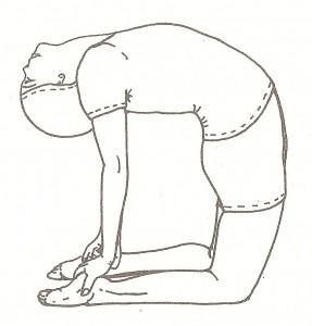 Ushtrasana (posizione del cammello) - variante