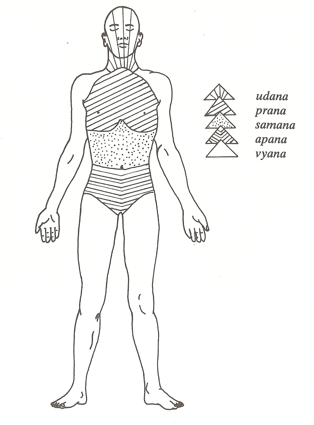 Introduzione al pranayama - Le 5 principali forze vitali