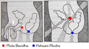 mula bandha e ashwini mudra