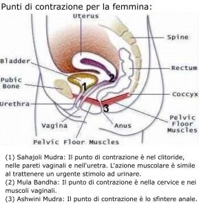 punti di contrazione per mula bandha, ashwini mudra e vajroli/sahajoli mudra nel maschio e nella femmina