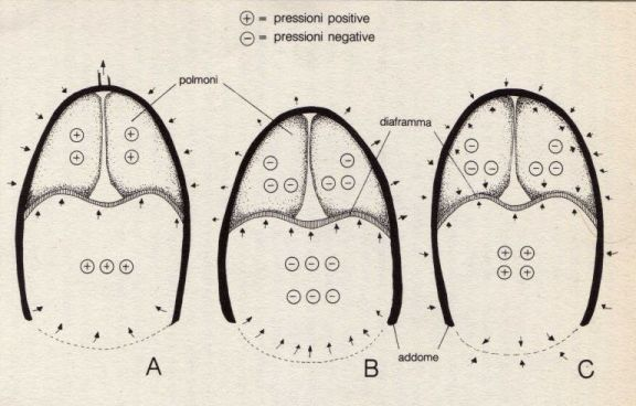 uddiyana bandha anatomia e fisiologia