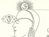 I chakra e le nadi: la Nadi Sushumna
