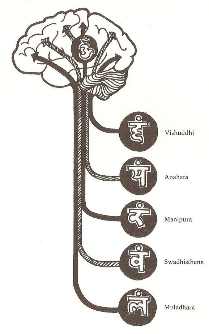 kundalini e il cervello