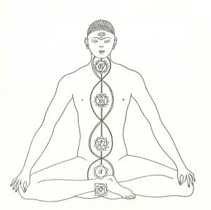 ida, pingala, sushumna, le tre nadi principali del corpo sottile umano, la cui conoscenza è essenziale per comprendere le basi su cui si fonda la tecnica di anuloma-viloma