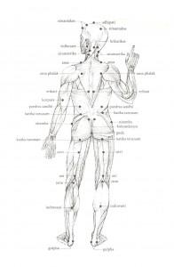 Ayurveda - marma della parte posteriore del corpo