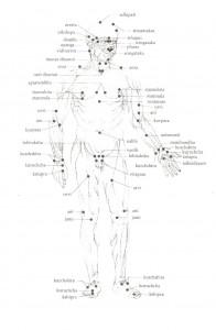 Ayurveda - marma della parte anteriore del corpo