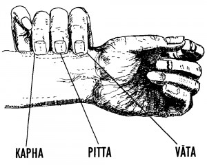 Nadi Vigyan - i tre polsi fondamentali