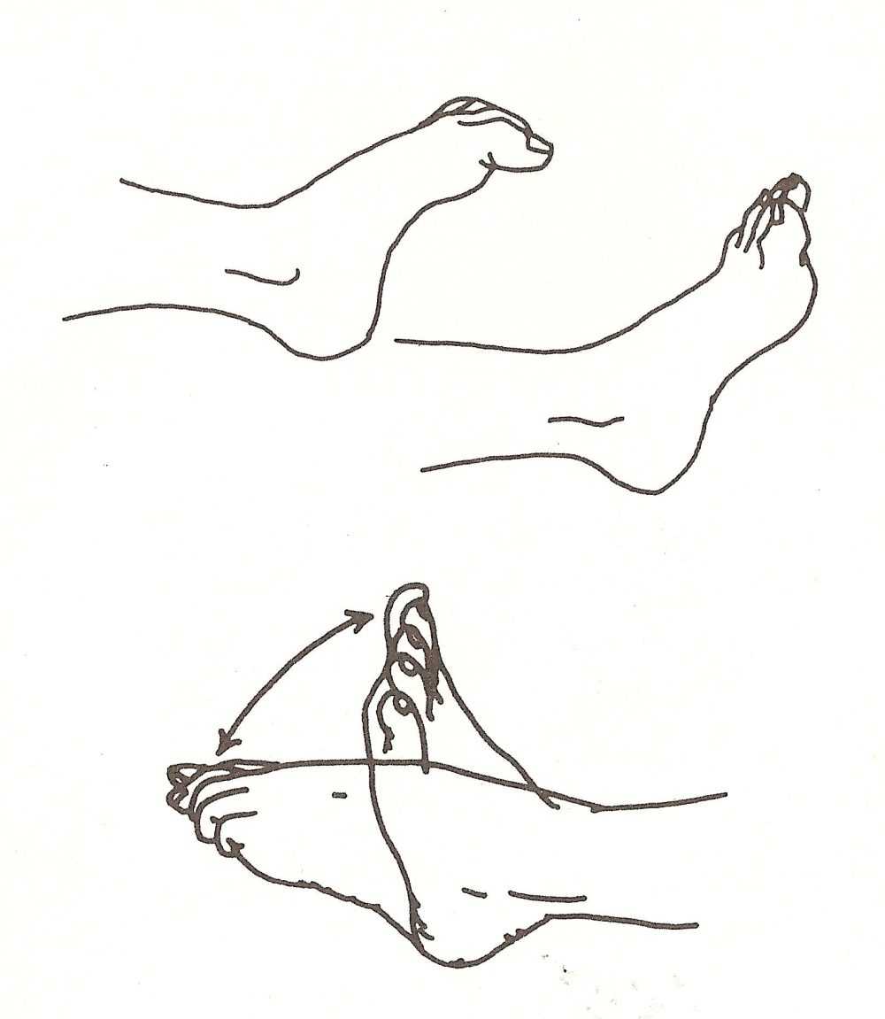 Padanguli naman e gulf naman - serie di pawanmuktasana - flessione delle dita dei piedi