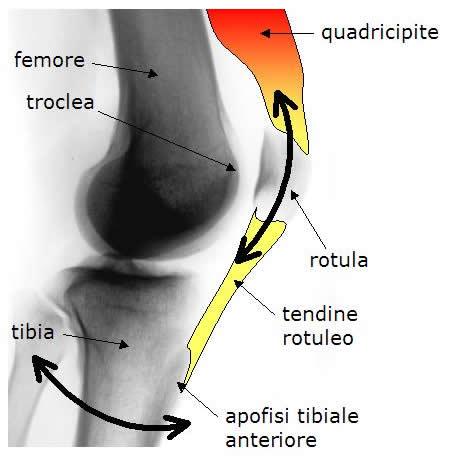 articolazione femoro rotulea
